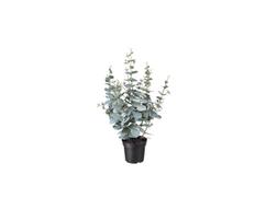 Dirbtinis augalas - eukaliptas €5,00