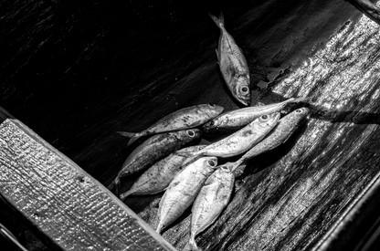 Les petits poissons de la mer