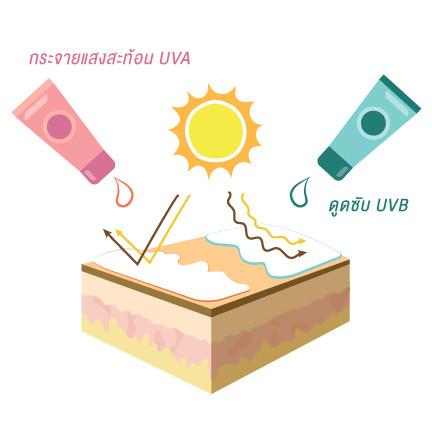 กระจายแสงสะท้อน UVA / ดูดซับ UVB
