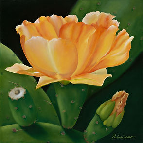 """Palmisano Title of oil painting is Prime Time 12"""" x 12""""x 1.5"""" gallery wrapped canvas framed in black floater frame. Prickly pear cactus bud and bloom flower starting to open and full opened. It has spines and the empty stem is called the fruit. The flower is yellow orange. green cactus pads. desert plant"""