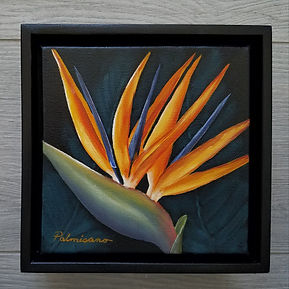 Bird of Paradise Flower 6x6x1.5 Queen of Paradise Oil Painting in 7x7x2.5 Black Floater Frame.