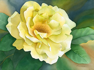 Morning Has Broken Yellow Rose Watercolor Paper Giclee