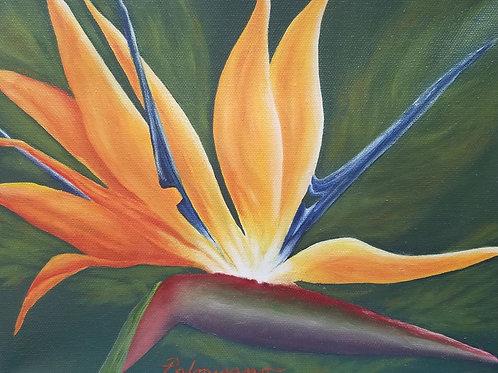 Sunbird Framed Original Oil Painting