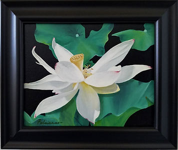 Lotus Flower Dance Pods Oil Painting Black Frame 8x10 oil painting of lotus flower and pod with lotus leaves curled up around the flower. Looks like it is dancing.