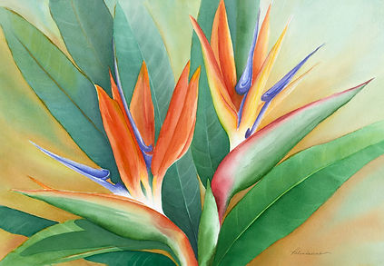 Two Tickets To Paradise Watercolor Bird of Paradise Flower