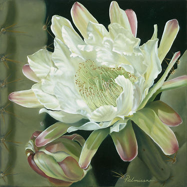 """Palmisano Only For One Night Night blooming cactus flower. Poem about the flower. Cardon Grande Argentine saguaro cactus night blooming 8"""" flower. Very fragrant. It was love at first sight."""