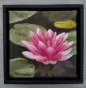 Palmisano_Waterlily 6x6.jpg pink waterlily framed in black floater frame. Lily pads around it.