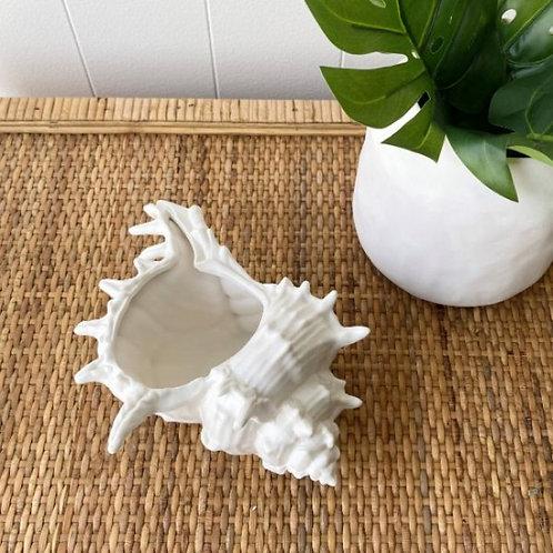 Ornamental Conch Shell