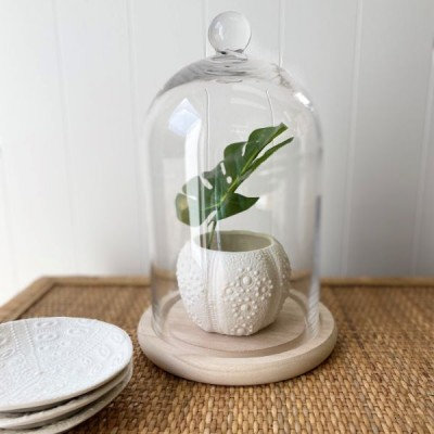 Glass Cloche with Timber Base