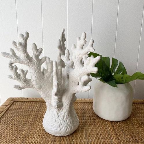 Ornamental Coral