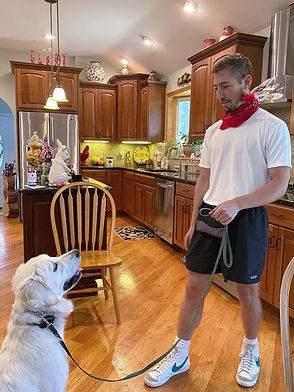 Private Dog Trainers in CT