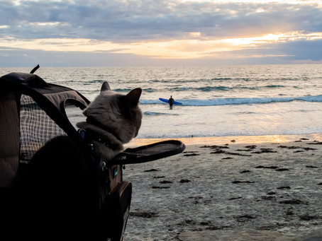 🎒How to Teach Your Cat to love their Carrier