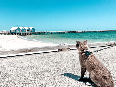 ☀️How to go Cat Exploring in Summer ?