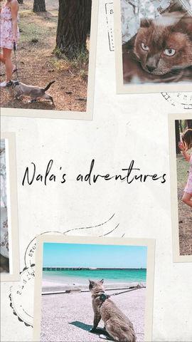 Nala's Life on wheels 🚌