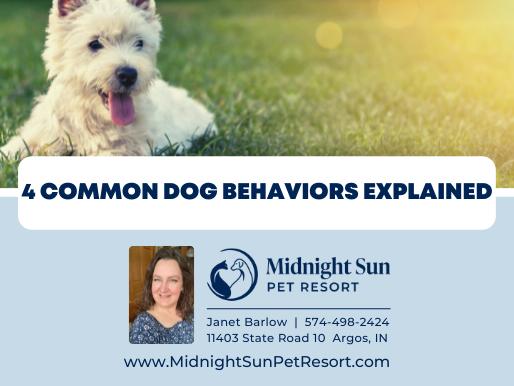 4 Common Dog Behaviors Explained