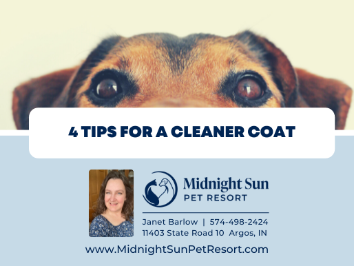 4 Tips for a Cleaner Coat