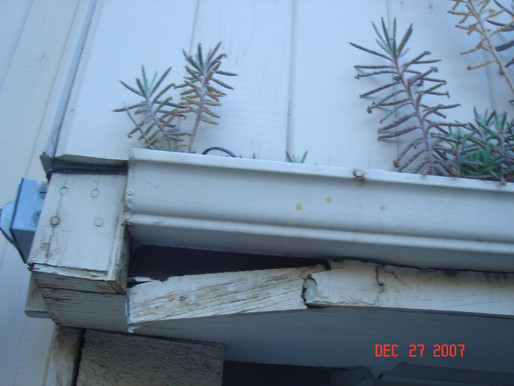 What Causes Dry Rot And Wood Decay