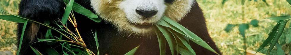 panda background.png