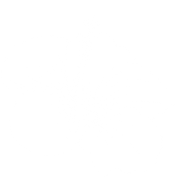hibiscus flower hawaii