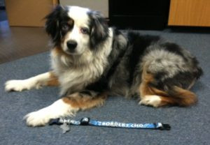 chief happiness officer angus and his new custom dog collar