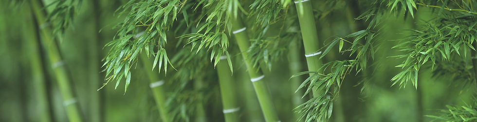 bamboo green background.png