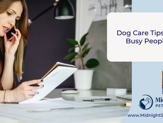 Dog Care Tips For Busy People