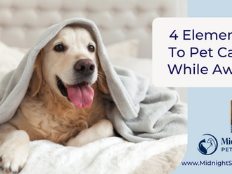 Key Points to Consider for Your Pet's Care While You are Away