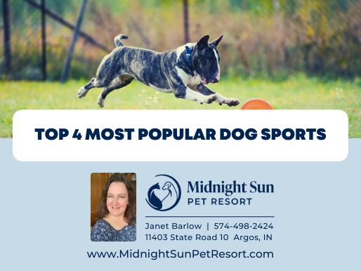 4 Most Popular Dog Sports