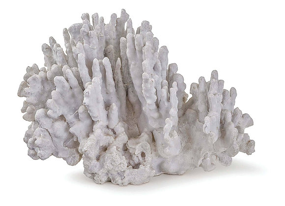 Large Coral