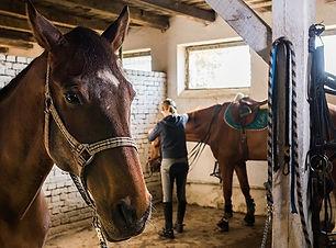 Horse Care Management.jpg