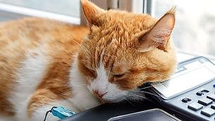 Veterinary Office Manager.jpg