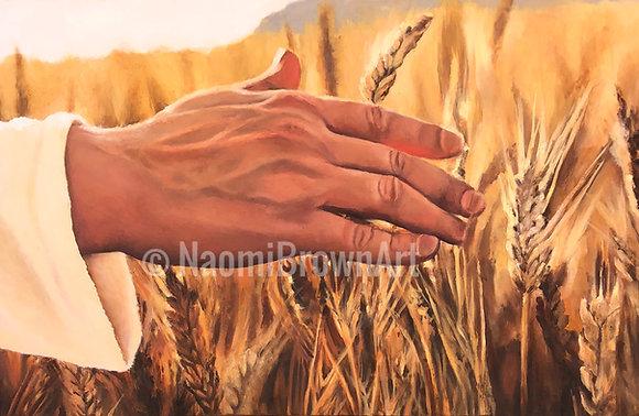 Heaven's Harvest  (Mathew 13:37)