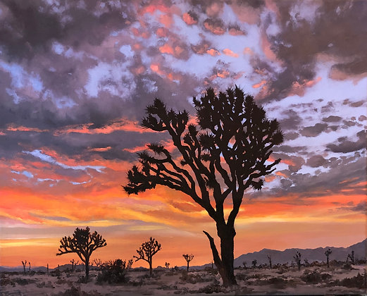 Sunset Joshua Tree Sillouette 16x20