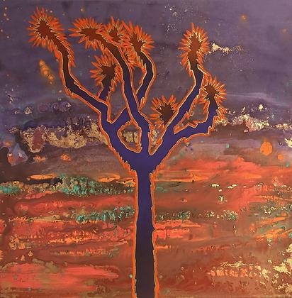 Burning Sky in Joshua Tree