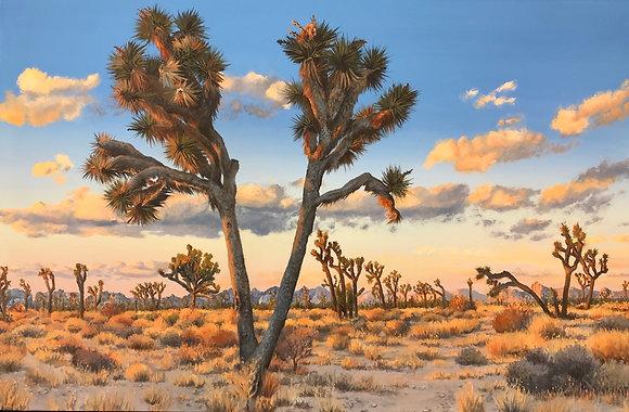 Joshua Tree Winter Sky