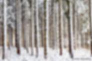 Nature Paysages forêts