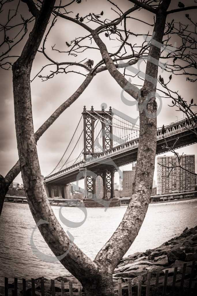 Brooklyn Bridge NB IMG_2763