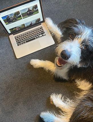 Remarkable Dogs Bear Online.jpg