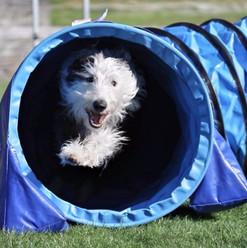 Alfie - Animal Physio NZ client consent