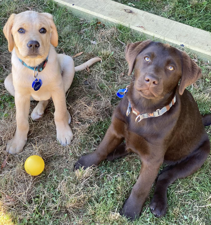Puppy School: Pups 2 Teens  (<18months)