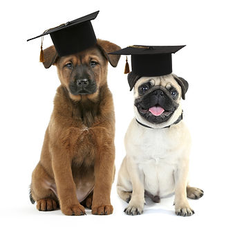 Cute dogs  with grad hats isolated on white - education concept.jpg