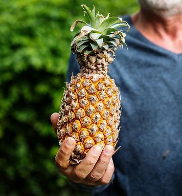 hands-holding-pineapple-organic-produce-