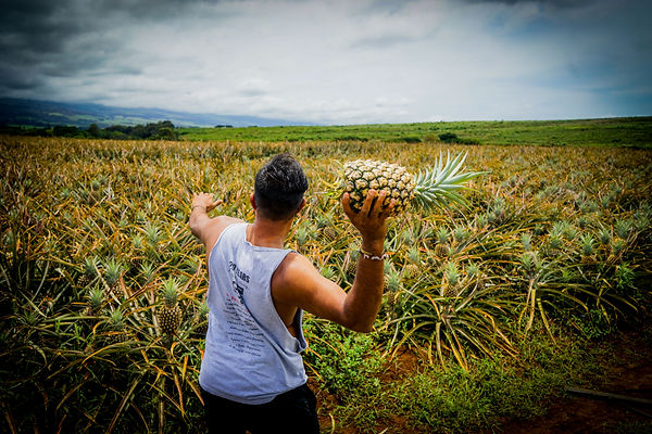 male-throwing-pineapple-into-agricultura