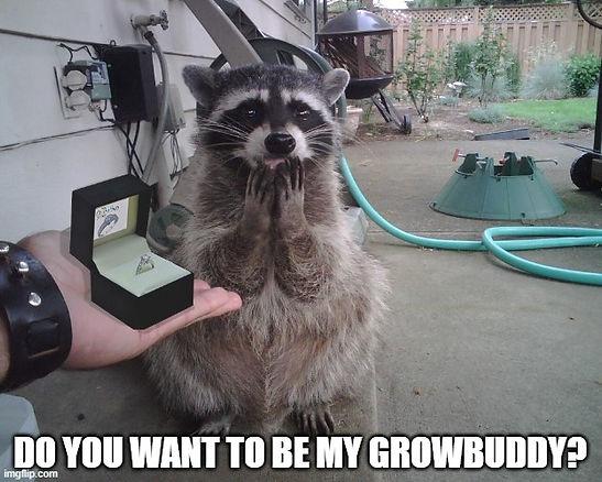Growbuddy-proposal_01.jpg