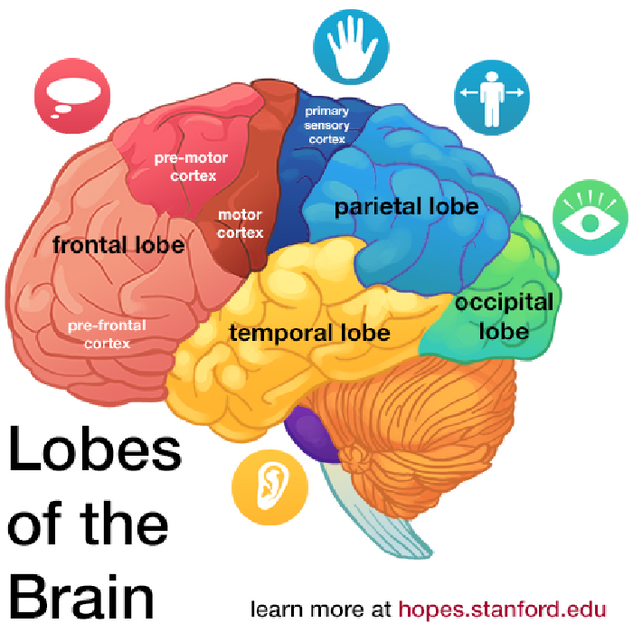 HOPES - Cranial Lobe Infographic