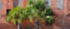 TTB_PalmettoTrees-01.jpg