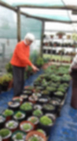 Large variety of plants available