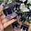 Thumbnail: Juicy Healing Earrings