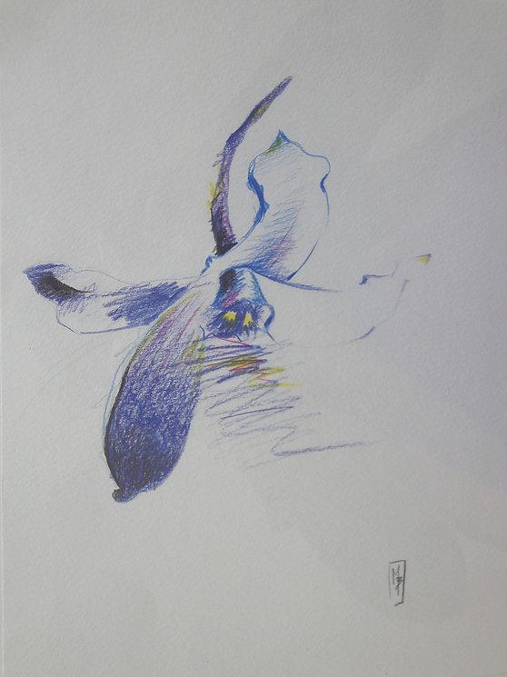 fleur bleue.jpg