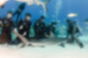 shark_dive_customers000_17.jpg
